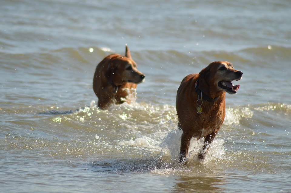 dogs-830006_960_720