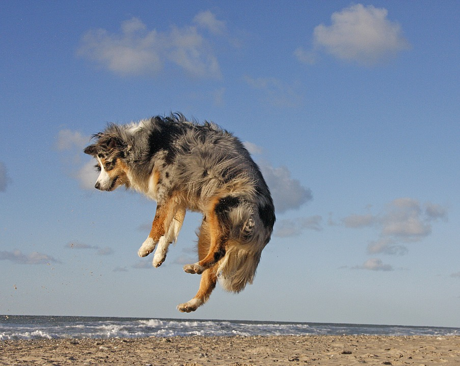 Leaping dog on the beach
